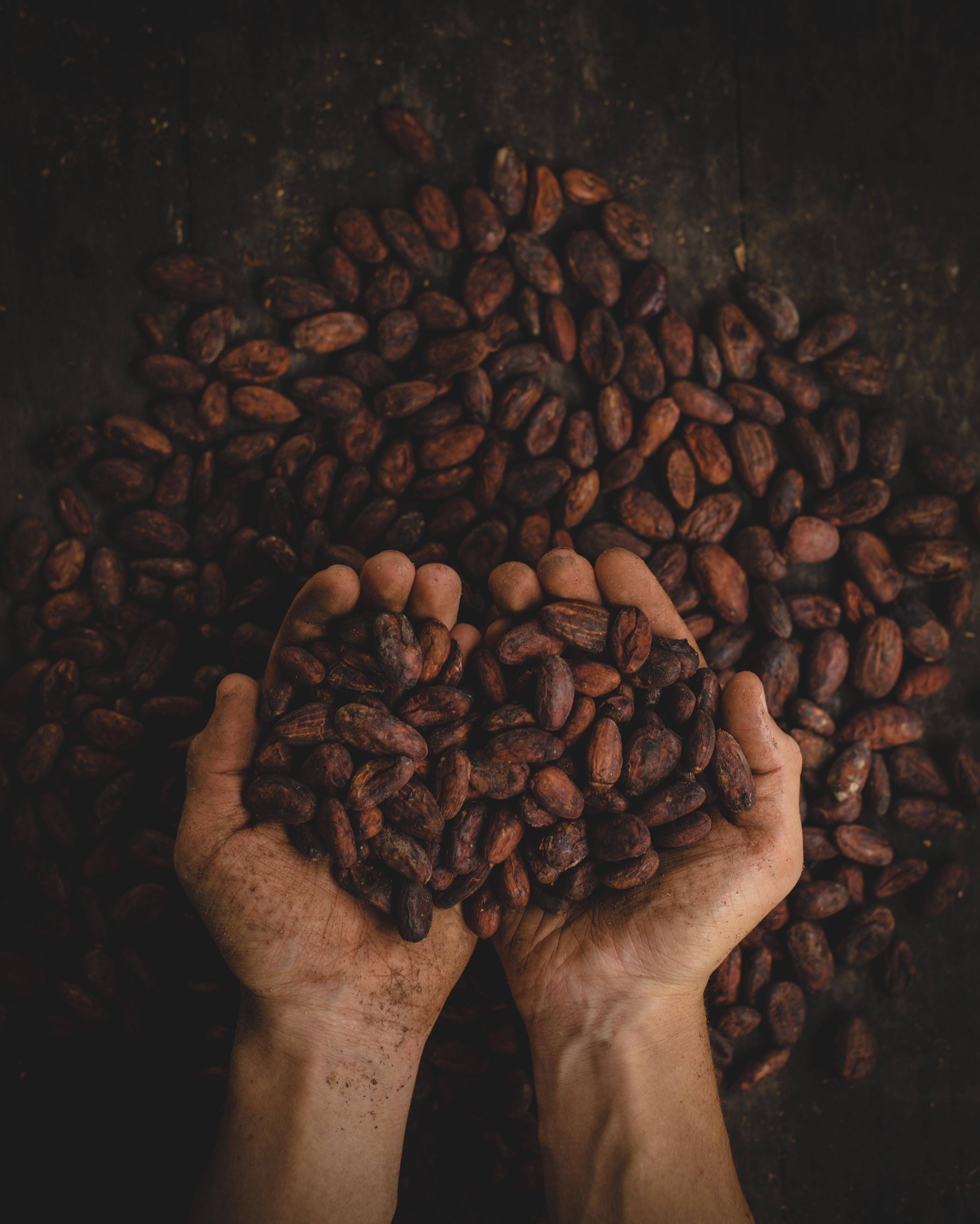 vertus-du-chocolat-blog-chocokada